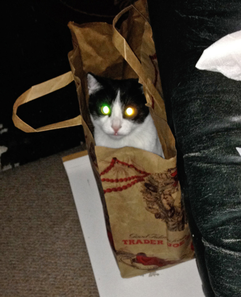 Kitten in a Trader Joes paper bag