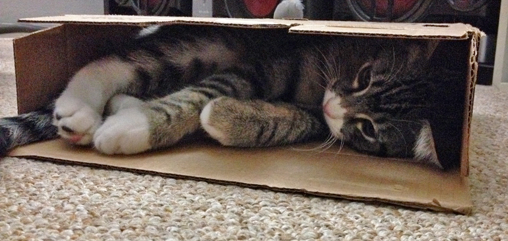 Kitten in a box 1