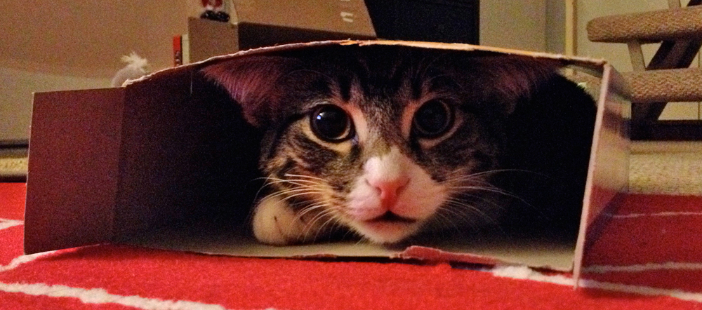 Kitten in a cereal box 2