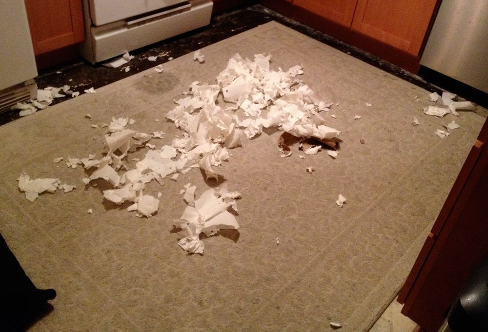 Kitten destroys paper towels
